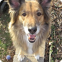Adopt A Pet :: Bridget - Charlottesville, VA