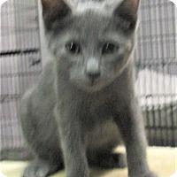 Adopt A Pet :: Rayna - Reeds Spring, MO
