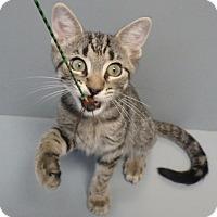 Adopt A Pet :: William - Seguin, TX