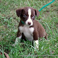 Adopt A Pet :: BUTTONS/ADOPTED - Waterbury, CT