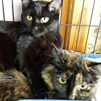 Adopt A Pet :: Bobby Flay and Shea - Westwood, NJ