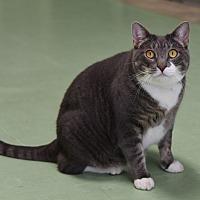 Adopt A Pet :: River - Winchendon, MA