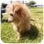 Photo 4 - Terrier (Unknown Type, Medium) Mix Puppy for adoption in El Cajon, California - Tessie