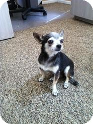 Chihuahua Mix Dog for adoption in Las Vegas, Nevada - Lucy