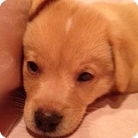 Adopt A Pet :: Harry Pup - Foster, RI
