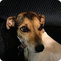 Adopt A Pet :: MILEY - Scottsdale, AZ