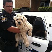 Adopt A Pet :: SAMMY - Childress, TX