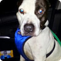 Adopt A Pet :: Timmy - Houston, TX