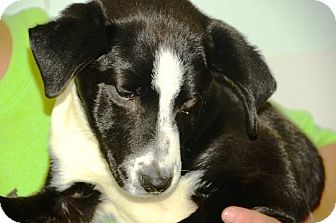 Terrier (Unknown Type, Medium) Mix Puppy for adoption in Kalamazoo, Michigan - Reba