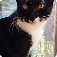 Adopt A Pet :: John Gotti - Edmond, OK