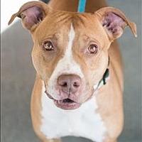 Adopt A Pet :: Jazz - Richmond, VA