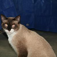 Adopt A Pet :: Mojo - Parkland, FL