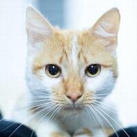 Adopt A Pet :: WINNIE - Pt. Richmond, CA