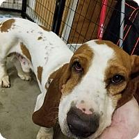 Adopt A Pet :: Rosco - Concord, CA