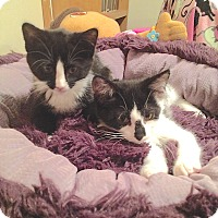 Adopt A Pet :: Pee Wee and Patti - Fowlerville, MI