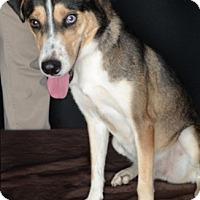 Adopt A Pet :: Angeline - Van Nuys, CA