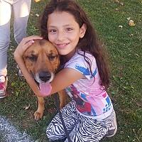 Adopt A Pet :: Tucker - Everett, WA