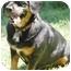 Photo 2 - Dachshund/Hound (Unknown Type) Mix Dog for adoption in Wake Forest, North Carolina - Monty