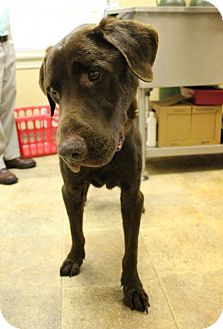 Labrador Retriever Dog for adoption in Cumming, Georgia - Dock