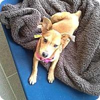 Collie Mix Dog for adoption in San Antonio, Texas - A272110 Maxine