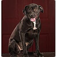 Adopt A Pet :: Tootsie DRD graduate - Owensboro, KY