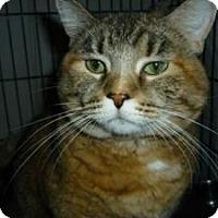Adopt A Pet :: Sara - Milwaukee, WI