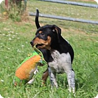 Adopt A Pet :: Outlaw - Spring Valley, NY