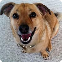Adopt A Pet :: Charlie - Golden Valley, AZ