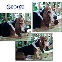 Adopt A Pet :: George - Marietta, GA