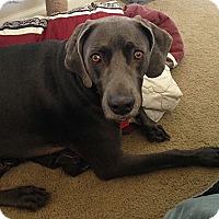 Adopt A Pet :: Gunner - Grand Haven, MI
