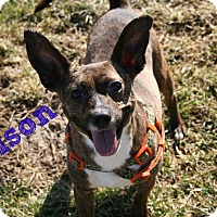 Adopt A Pet :: Nelson - Brazil, IN