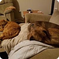 Adopt A Pet :: CLAYTON - Jacksonville, FL