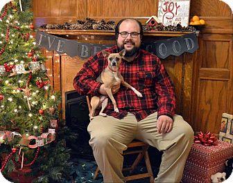 Chihuahua Mix Dog for adoption in Huntington, Indiana - Daisy Mae