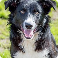 Adopt A Pet :: Hank - Patterson, CA