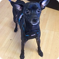 Adopt A Pet :: Marty in CT - East Hartford, CT