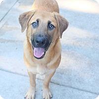 Adopt A Pet :: Willow Rosenberg - Jersey City, NJ