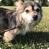Adopt A Pet :: Trixie - Maryville, MO