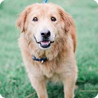 Adopt A Pet :: Sweetie $125 - Seneca, SC