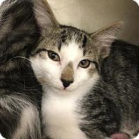 Adopt A Pet :: Jethro - Walnut Creek, CA