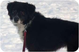 Border Collie Mix Dog for adoption in Toledo, Ohio - Spiz