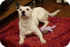Fox Terrier (Smooth)/Bull Terrier Mix Dog for adoption in Marietta, Georgia - Gracie
