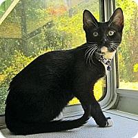Adopt A Pet :: Milo - Lafayette, CA