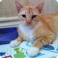 Adopt A Pet :: Missy - The Colony, TX