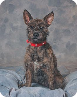 Terrier (Unknown Type, Medium) Mix Dog for adoption in Aqua Dulce, California - Chance