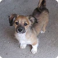 Adopt A Pet :: Barney - San Ysidro, CA