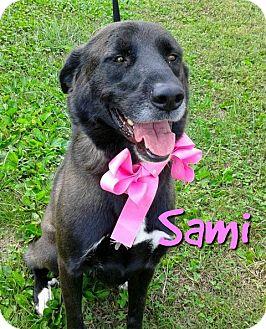 Labrador Retriever/Shepherd (Unknown Type) Mix Dog for adoption in Princeton, Kentucky - Sami