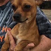 Adopt A Pet :: Cloony - Centerville, GA
