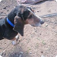Adopt A Pet :: Wilson - Albuquerque, NM