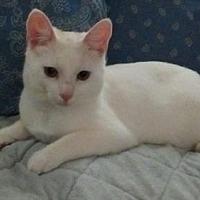Adopt A Pet :: Spanky (Darla Sue) - Trenton, NJ