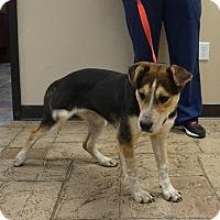 Adopt A Pet :: Crystal - Oviedo, FL